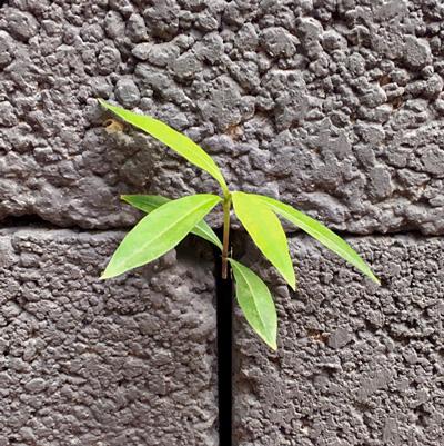 plantje in beton